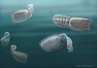 Fossils of a weird eyeless creature called a vetulicolian have been discovered on Kangaroo Island in Australia.