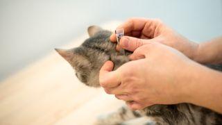 topical flea treatments