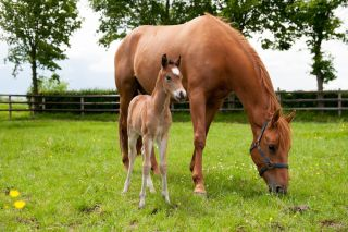 foal with mare eating