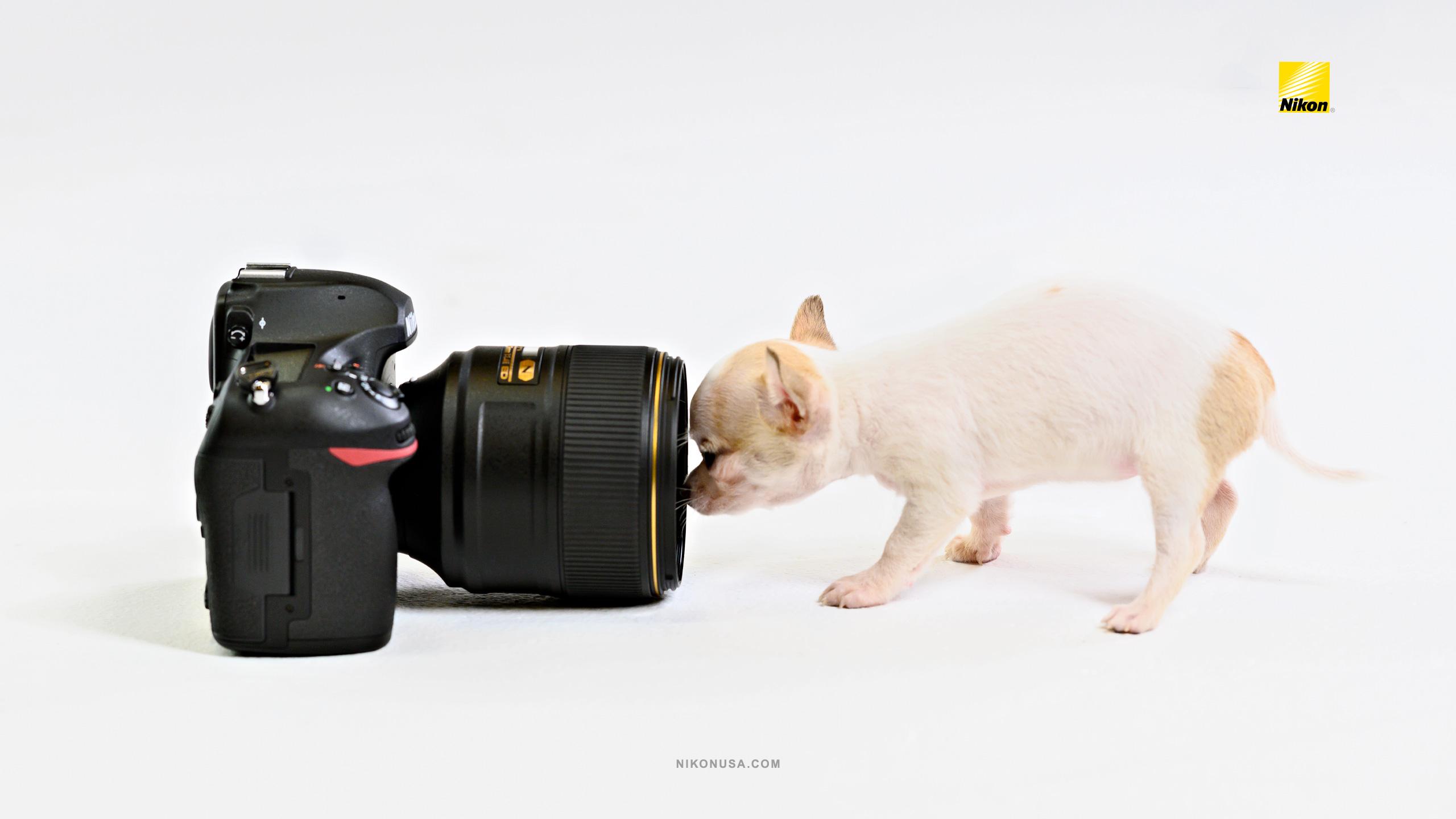 Has Nikon has gone barking mad? | Digital Camera World