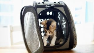 Best cat carriers: Kitten in a carrier