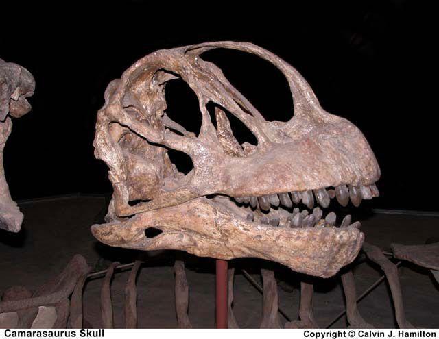 Fosil resmi