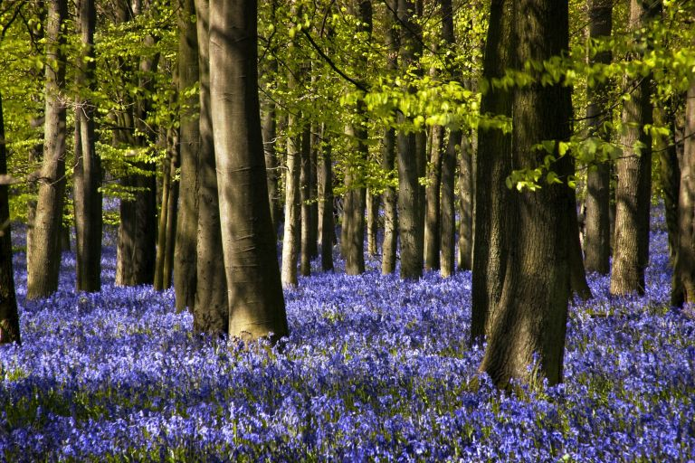 Which National Trust places are open