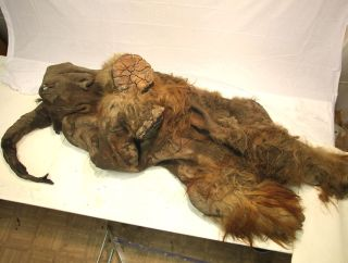 The frozen mammoth carcass is the first complete specimen to be studied.