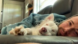 deaf and blind dog Plum curled up with her owner on couch