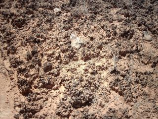 Biological Soil Crust in Hovenweep National Monument