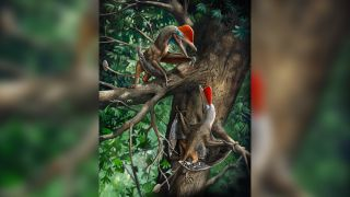 An illustration of two Monkeydactyls climbing about in their arboreal home. One grasps a giant cicada in its thumbs.