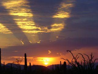 national parks, organ pipe cactus, sonoran desert