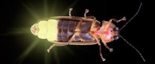 firefly-bug-100702-02