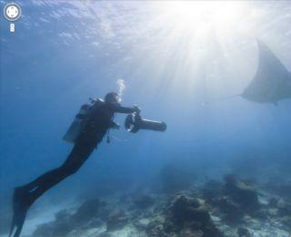Google, coral reef, oceans
