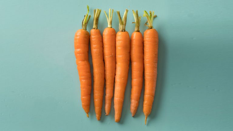 Health benefits of carrots: a row of fresh bright orange carrots on a turquoise background