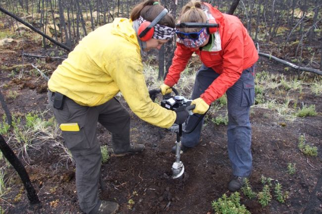 Merritt Turetsky's team samples frozen permafrost soils in Alaska and Canada to understand how past soil types have influenced the ability of Arctic ecosystems to cope with modern environmental change.