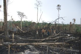 Deforested Awa tribal land