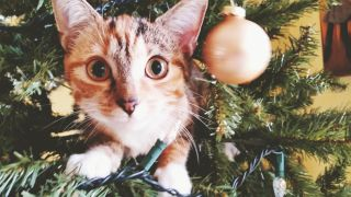 cats versus Christmas trees