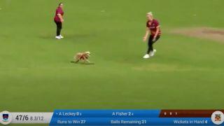 Dog steals ball during Irish cricket match
