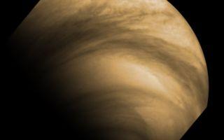 Chasing Clouds on Venus