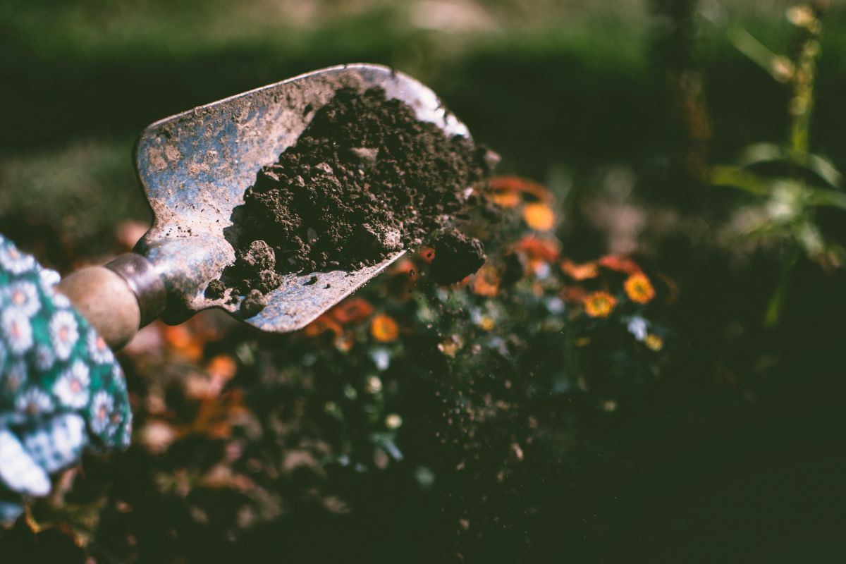 5 ways to use coffee grounds in the garden – extraordinary ways to boost your blooms
