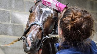 A horse being washed with the best horse shampoo