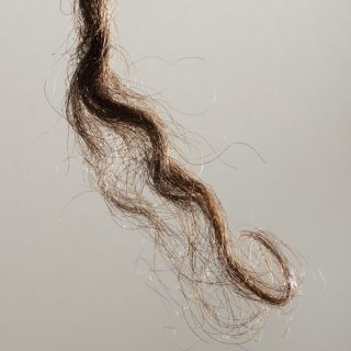 Tuft of Aboriginal hair, Aboriginal Australian genome hints at how humans dispersed
