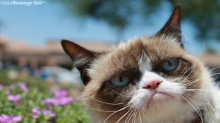 Grumpy Cat lands movie deal, doesn't care