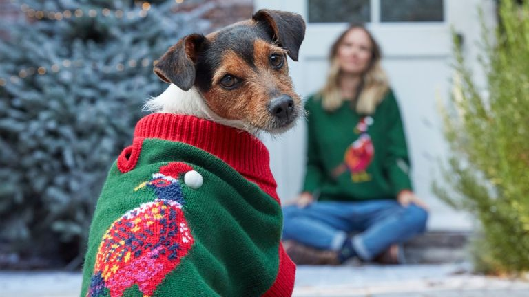christmas jumpers for dogs: dog wearing joules christmas jumper