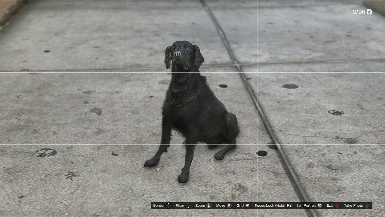 gta v ps4 director mode animals