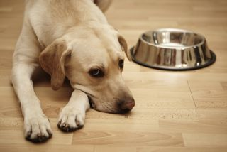 A sad dog next to an empty food bowl.