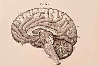 A medical illustration of the human brain from 'Quain's Elements of Anatomy, Eighth Edition, Vol.II' (by William Sharpey MD, LLD, FRS L&E, Allen Thomson, MD, LLD, FRS L&E, and Edward Albert Schafer) depicts the right half of the brain divided by a vertical antero-posterior section, 1876.