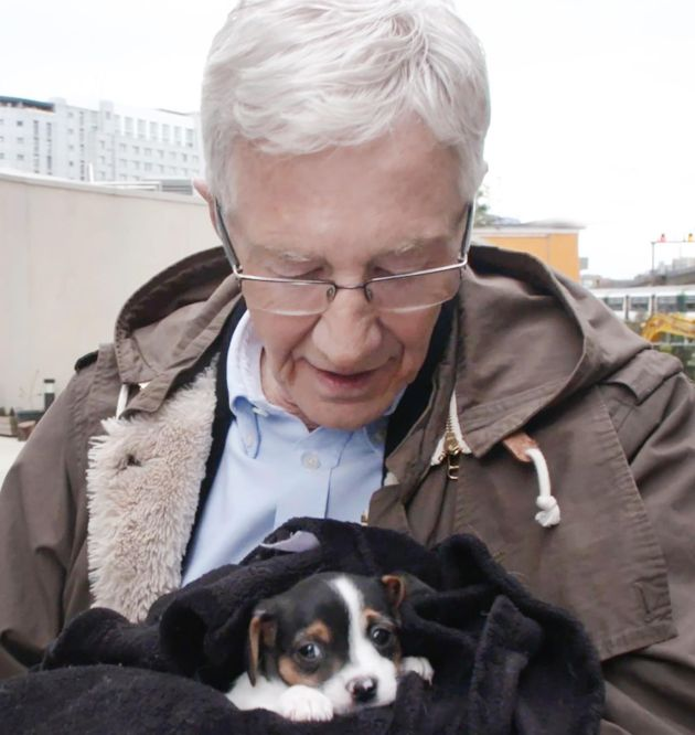 TV tonight Paul O'Grady: For the Love of Dogs