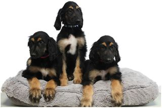 Attack of the (Adorable) Clones: Puppies Are 'Reclones' of