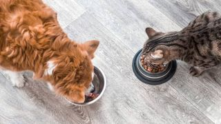 How to stop your dog from eating cat food