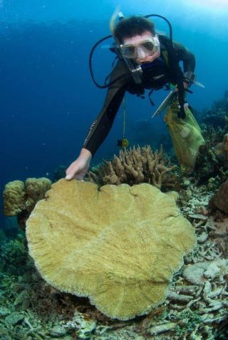 semporna-coral-diver-101220-02
