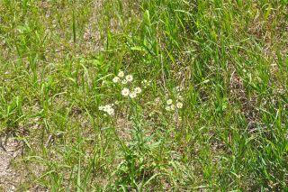 north american prairie, ecosystems