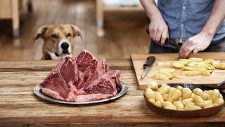Dog watching a man prepare homemade dog food