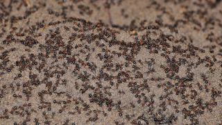 Scientists found nearly a million wood ants trapped in a bunker formerly used by the Soviets to store nuclear weapons.