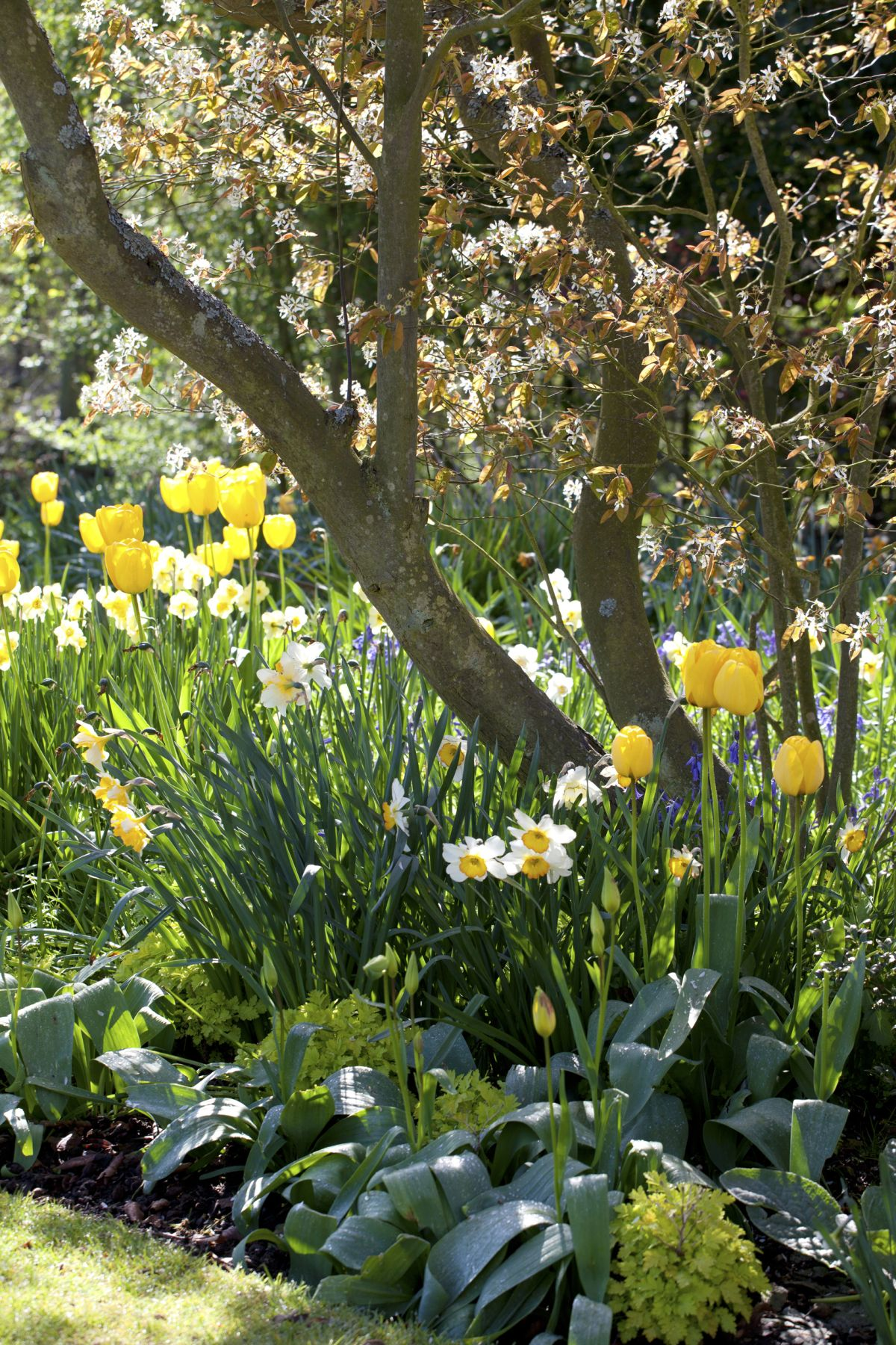 How to plant bulbs – with expert tips from Alan Titchmarsh