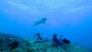 Shark Academy on Discovery Plus
