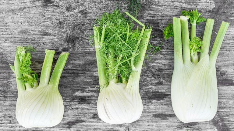 fennel - bulbs lined up on a table