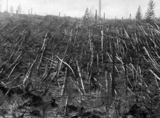 A mysterious blast in 1908, thought to have been caused by a meteor, flattened a Siberian taiga forest. This photo was taken in 1938, during an expedition by Russian mineralogist Leonid Kulik, investigating the event.