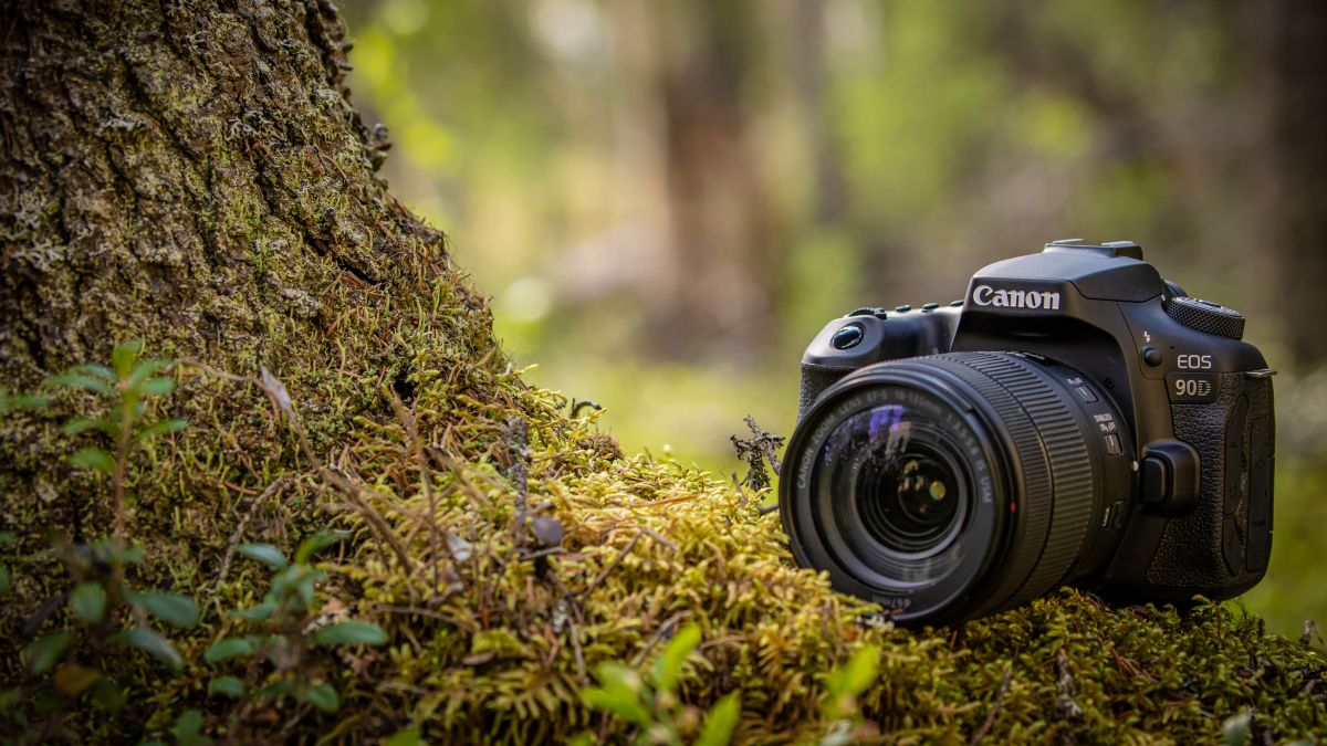 The best DSLR in 2020: DSLR cameras for beginners, enthusiasts and pros