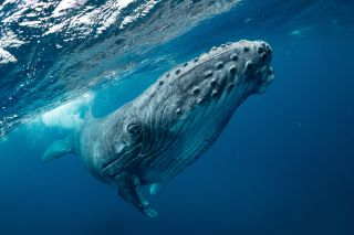 A humpback whale comes uncomfortably close