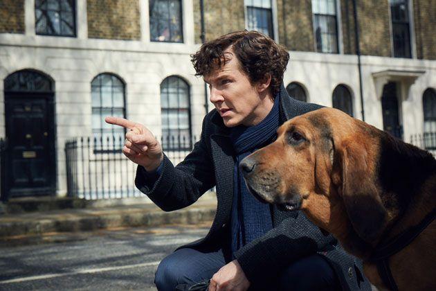 Sherlock and bloodhound