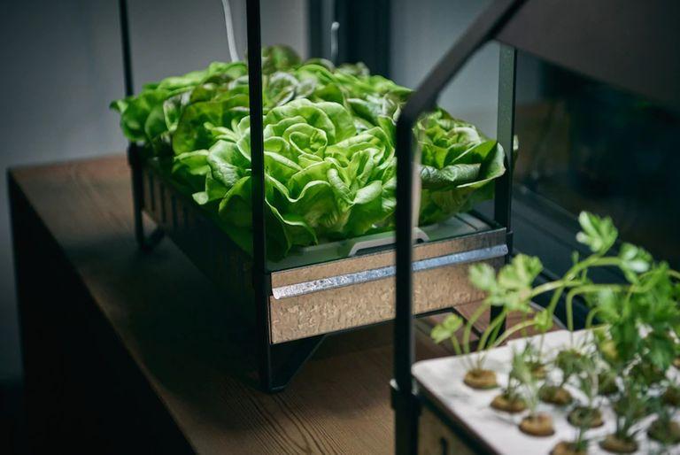 Smart garden: Ikea hydroponics