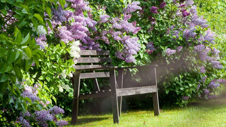 what to plant in october lilac bushes around a wooden garden chair