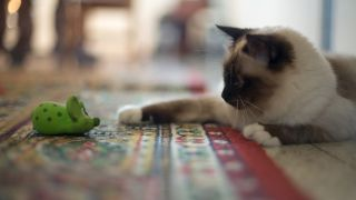 Best cat toys: A cat playing with a mouse toy
