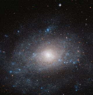 On the tail of the Great Bear in the Ursa Major constellation, the spiral galaxy NGC 5585 can be seen here, as imaged by the Hubble Space Telescope. The galaxy is made up of stars, dust and gas clouds and an abundance of dark matter.