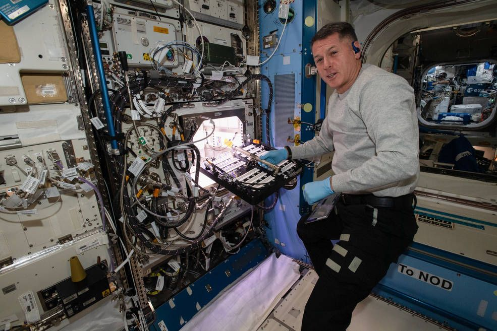 Astronauts are growing chile peppers in space in spicy first - Space.com