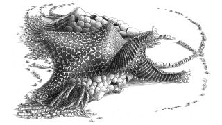An artist reconstruction of the starfish ancestor named Cantabrigiaster fezouataensis