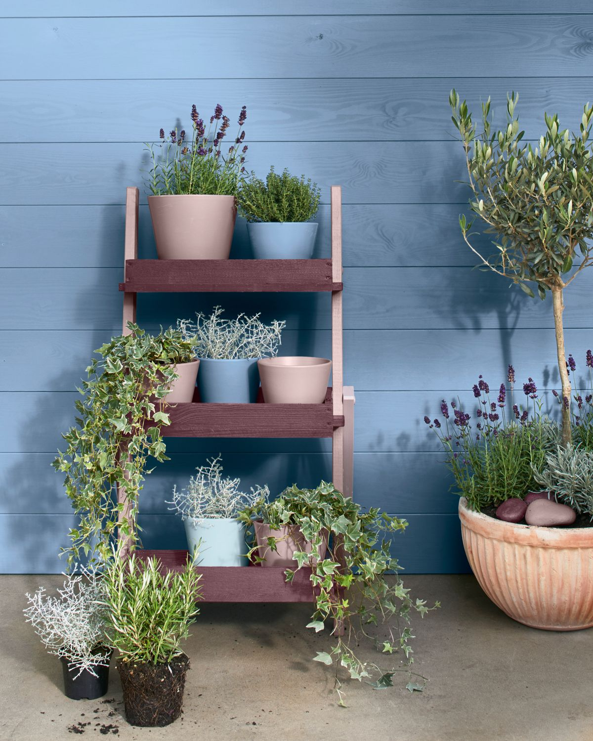 House plants: 19 gorgeous display ideas to brighten up your