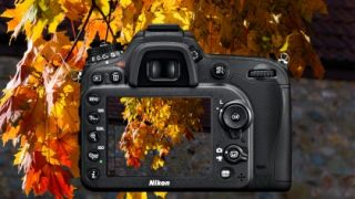 8 tips for shooting autumn leaves